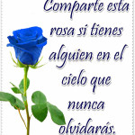 Rosa azul significado