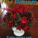Fotos de rosas rojas con amor