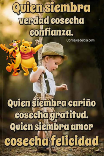 cosechar frases