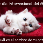 Feliz día internacional del GATO 2021